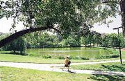 "Surrounded by majestic shade trees, Potter Lake is often named as one of the prettiest spots on campus. It&squot;s a place where students say they can get ""away from the hustle and bustle."""