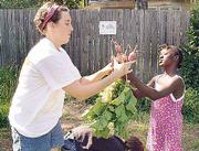 Kansas University's Center for Community Outreach offers KU students a variety of local volunteer opportunities. Sarah Hill, a Kansas University senior from Hutchinson, left, works in June with Nanette Caddy to pull radishes at the Boys and Girls Club of Lawrence's garden.