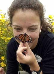 Tagging monarch butterflies with stickers for population and migration studies, Alexandra Fraser, Lawrence, participates in the annual Monarch Watch at the Baker Wetlands. Saturday morning's event was a cooperative effort between the Kansas University entomology program and the Jayhawk Audubon Society.