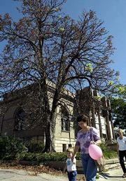 A dry and sickly looking horse-chestnut tree in front of the Lawrence Arts Center at Ninth and Vermont streets is not dead, despite the worries and questions of many passersby. The tree is just going through an annual change and should stage a glorious comeback in the spring. Rylee Flint, 2, and her mother, Debbie, took a stroll recently past the conversation-starting tree.