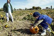 SAMUEL BEERS rolls his pumpkin of choice over to his keeper pile while his mother, Wendy Beers, looks on. The family drove to Schaake Pumpkin Patch, 1791 N. 1500 Road, Wednesday from Olathe to pick their pumpkins. The patch has welcomed favorable conditions for growing pumpkins as opposed to last year's drought conditions.