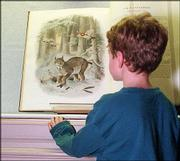 "Nine year-old Charlie Thiel examines ""Felis canadensis"" by Daniel Giraud Elliot, from the 1883 work ""A monograph of the Fekidae, or family of the cats."" The image is an example of the library&squot;s exceptional collection of works in the area of mammology."