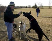 While dogs may still enjoy short visits to Lawrence's leash-free park near Clinton Lake, they need shelter and other protection from the elements during cold winter days. Here, Andrew Stainberg plays catch with several dogs at the park.
