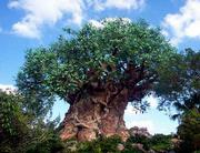 The Tree of Life is the centerpiece of Discovery Island at Disney's Animal Kingdom in Orlando, Fla.