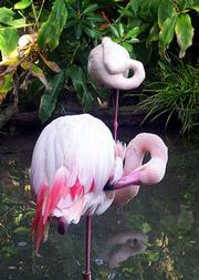 Pink flamingos are just one of the many bird species at Animal Kingdom.