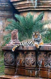 "A tiger rests among the ""ruins ""of an ancient palace in the Anandapur Royal Forest in the Asia section."