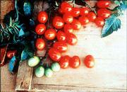 Tomato F1 Agriset 8279 Grape