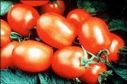 Tomato F1 Health Kick