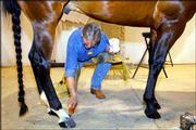 Farrier Terry Stever is framed by the legs of a quarterhorse as he paints the hooves after putting shoes on the animal at the 96th National Western Stock Show and Rodeo in Denver.