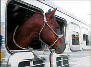 A horse in a surreal trailer.
