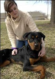 A 9-month-old male rottweiler named Romeo spends time outdoors with Lawrence Humane Society educator Amy Tramill. Some dog breeds, like rottweilers and pit bulls, are considered dangerous. But experts say these dogs are typically trained to be aggressive by their owners.