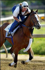 Harlan's holiday is worked out by assistant trainer Helen Pitts on Thursday at Pimlico Race Course in Baltimore.