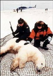 """Ewan McGregor, right, host of PBS' """"Nature"""" episode """"The Polar Bears of Churchill,"""" takes a close look with Canadian wildlife officer Wayde Roberts at a tranquilized polar bear before it is removed by helicopter to the Hudson Bay ice in Manitoba, Canada. The show premieres today on PBS stations."""