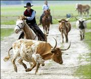 "John Curry, alias ""Kansas Jack"" of Olathe and a member of the Single Action Shooters Society of Olathe, helps drive some Longhorn cattle at the Free State Farm in Lawrence. Curry and members of the new organization ""Cowboys"" gathered Thursday in Lawrence to develop and encourage travel in Kansas to unique cowboy attractions."