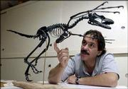 David Burnham, who runs the vertebrate paleontology lab at Kansas University's Natural History Museum, is putting together an exhibit for this fall on a small dinosaur called the Bambiraptor feinbergi. Burnham describes the bone structure of the dinosaur using a cast model from the bones that were discovered in Montana.