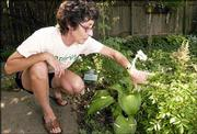 Jeanne Klein, a theater professor at Kansas University, tends the On Stage hosta in her backyard garden. Klein likes to pick flowers based on their names, which she says helps give them character.