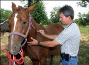 Veterinarian Tim Jones of Baldwin administers a West Nile Virus vaccination to Fancy, an 8-year-old quarterhorse owned by Tammy Michael of rural Baldwin. Fancy received the shot Friday, two days after the first reported case of the virus in Kansas claimed a horse in Cowley County.