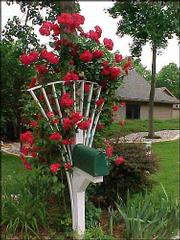 Roses supported by a sturdy trellis add interest and color to the setting of a mailbox.