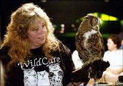 WildCare volunteer Paula Halleran-Hodge shows a great horned owl to campers during an educational program on birds of prey at the Clinton State Park during Labor Day weekend. WildCare and its director are targets of a federal investigation after several birds of prey were found to be malnourished at the center.