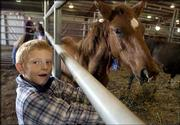 A.J. Crable, 7, Topeka, entices a young sorrel pony with some hay during a horse auction at the Douglas County 4-H Fairgrounds. Ninety wild horses and 30 burros were up for adoption Saturday during the auction organized by the U.S. Bureau of Land Management. This sorrel was adopted by Lawrence residents Daniel and Jane Pennington.