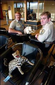 U.S. Fish and Wildlife inspectors Michael Kiehn, left, and Chris Andrews pose with a stuffed smuggled Vietnamese leopard, foreground, and a mastodon carved from Russian whale bone. The items were seized following illegal importation attempts at Ted Stevens Anchorage International Airport in Anchorage, Alaska.