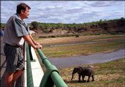 Arrie van Wyk, project manager of the world's largest game park, looks out at grazing elephants in the Kruger National Park in South Africa. The new cross-border reserve, the Greater Limpopo Transfrontier Park, will link three game reserves along the borders of South Africa, Zimbabwe and Mozambique.