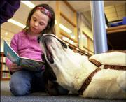 "HANNIBAL, A St. BERNARD, stretches while listening as Tori Wendig, 7, practices her reading skills at Dielber School in Perkasie, Pa. Hannibal is one of the licensed ""therapy dogs"" who comes to the school and some libraries in northern suburbs of Philadelphia to help children read with more confidence through a program called Paws With Patience."