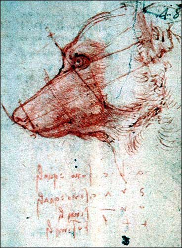 Italian English Animsld: 1000+ Images About Da Vinci Notebooks On Pinterest