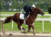 Assistant trainer Robin Smullen rides Funny Cide during a workout Tuesday in Elmont, N.Y. Funny Cide, winner of the Kentucky Derby, is a 7-5 favorite to win today's Preakness in Baltimore.