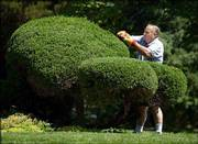 Gerald Shewbart, Lawrence, gives his juniper bushes a trim at his central Lawrence home. As more summerlike temperatures hit the area Wednesday -- the high was 88 -- gardeners gave attention to their greenery. For today's forecast, please see page 8B.
