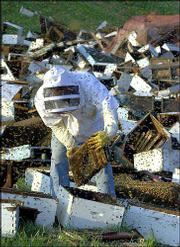 Mark Roberts assists in the cleanup of an accident Sunday that involved millions of bees escaping in Claycomo, Mo.