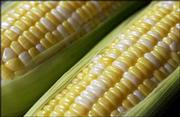 Sweet corn is available at area farms and the Farmers Market in Lawrence. It sales for about $4 per dozen. The sweet corn season is expected to last until about mid-August.