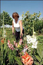 Ronda Schulte trims a handful of glads from her garden.