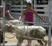 Megan Barber, Lecompton, washes her Dorset sheep, Mini, in preparation for today's sheep show at the Douglas County Free Fair. Barber was at the fairgrounds Wednesday. Showing and judging of animals continues into the weekend at the fair.