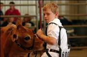 Quinton Keen, 11, of the Pioneers 4-H Club, shows off his Jersey heifer in the junior heifer class. Quinton competed Thursday morning at the Douglas County Free Fair.
