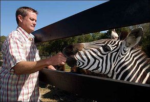 Lawrence developer Doug Compton feeds one of his two zebras at his home. Compton's family is host to many animals, including bison and camels.