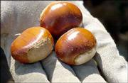 Chestnuts are versatile and can be used in many recipes.