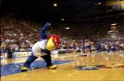 Baby Jay warms up the crowd before a basketball game in 2002. Amy Hurst Rachman, the Kansas University alumna who created Baby Jay in 1971, along with her mother, has donated funds to help pay for costumes and dry-cleaning for the KU mascots.