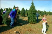 "Jim Current, of Gower, Mo., drags his family&squot;s Christmas tree, followed by his three daughters, Courtney, Claire and Caitlin, at Pik-A-Pine farms in St. Joseph, Mo. Current grew up hunting for the right tree with his grandfather, who ran a tree farm. ""It&squot;s kind of carrying on a tradition,"" he says."