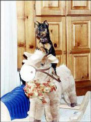 Darby, a 4-year-old miniature pinscher, rides a rocking horse. The dog belongs to Raeleigh Heck, of Lawrence.