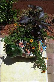 A ceramic turtle serves as a planter for the Ericksons.