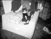 Sylvester the cat strikes a decidedly human pose while relaxing at home. Sylvester belongs to Thomas Thompson, of Lawrence.