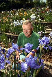 Cliff Elston cares for irises at his business, The Iris Place, 1578 N. 962 Road. Elston, who was pictured Friday in his garden of irises, says the business has 400 varieties of the flowers, which are at their peak bloom this weekend.