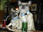 French bulldogs Titi, left, and Nelson cozy up to the bar at Cafe le Bouledouge Brasserie, one of the many establishments in Paris where dogs are welcomed.