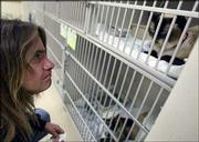 Bruce Graham, of Wichita, says a prayer with his two cats just before the start of surgery to transplant a kidney from Inky, at bottom, to Seemore, at the Michigan Veterinary Specialists office in Auburn Hills, Mich. The surgery was performed later Friday at a cost somewhere between $8,000 and $12,000.
