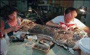 "T.J. Meehan, vertebrate paleontology graduate student, right, and Barb Parrish, volunteer from Shawnee, clean the surface of the upper arm bone of ""Lyle"" a camarasaur, in this 1998 file photo at Kansas University Museum of Natural History. A joint project involving Lyle between KU and Science City is still in the works, despite some financial difficulties at the Kansas City, Mo., museum."