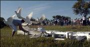 White doves are released at Sunday's closing ceremony for the Lawrence Sesquicentennial at Sesquicentennial Point at Clinton Lake.
