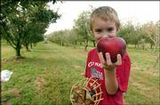 Seven-year-old Nile Fisher holds an apple that he picked at Fieldstone Orchard and B & B near Overbrook. His family visited the orchard Friday.