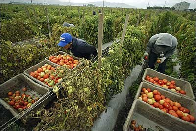 ba ethics migrant tomato workers To be competent administrators, social workers need a comprehensive and firm grasp of ethical dilemmas in administration ethical analysis, moral reasoning, and decision-making strategies and ethical risk-management protocols to protect clients and prevent ethics complaints and litigation.