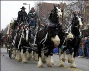 """Remington,"" a shire horse, rears up in mid-trot while pulling Shawn Gordon, left, Brighton, Mo, and Larry Elarton, Ft. Morgan, Co., on a hitch wagon during last year&squot;s Old-Fashioned Christmas Parade in Downtown Lawrence. Lawrence&squot;s CornerBank stepped in to save the parade after the former owner of the Eldridge Hotel said he could no longer sponsor it, but has been disappointed by the low number of corporate sponsorships."